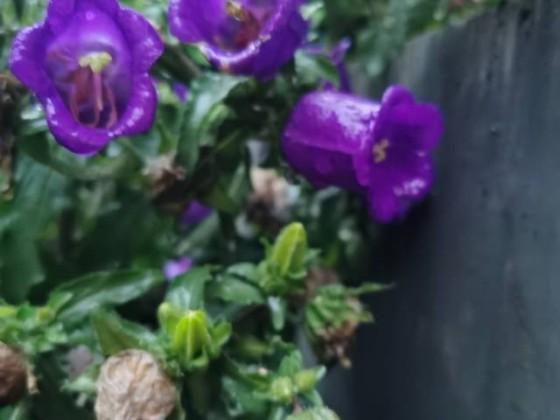 其实不知道是什么花,但很漂亮呀